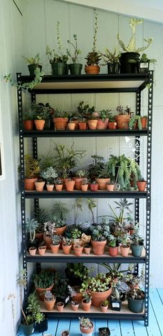 Planting Succulents, Garden Plants, Indoor Plants, House Plants, Planting Flowers, Apartment Plants, Plants Are Friends, Plant Aesthetic, Room With Plants