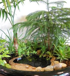 Brilliant And Creative DIY Nano Pond Garden Combination - Decomagz Plants, Little Gardens, Miniature Garden, Small Gardens, Garden Terrarium, Fairy Garden Houses, Ponds Backyard, Garden News, Garden Landscaping
