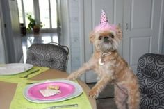"Love this doggie birthday pic ~ from ""the berry.com"""