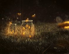 How to Create a Glowing, Fireflies Photo Manipulation in Adobe Photoshop Photoshop For Photographers, Photoshop Photography, Photoshop Tutorial, Photoshop Actions, Adobe Photoshop, Firefly Photography, Girl Photography Poses, Nature Photography, Photo Manipulation