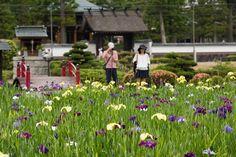 Japaninfo added 33 new photos to the album: สวนไอริส@วัด Eitaku-ji,Sanda/Hyogo — at 永沢寺.