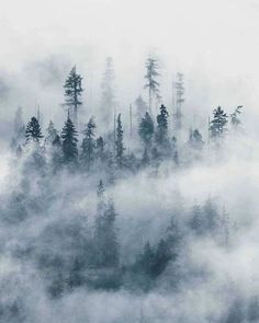 When nature creates art Who else loves trees and fog? Destinations, Good Morning Photos, Foggy Morning, Nature Adventure, Colorful Trees, Photo B, Beautiful Places To Visit, View Photos, Mists