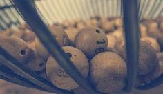 Una administración de Membrilla (Ciudad Real) reparte el primer premio de la Lotería Nacional