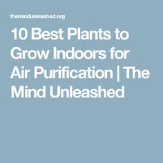 10 Best Plants to Grow Indoors for Air Purification | The Mind Unleashed