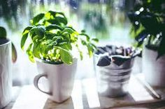 Fresh herbs are great to have on hand in the kitchen. Below are a few ways that you can grow herbs in
