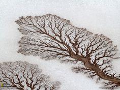 墨西哥下加利福尼亚州的沙漠,河流形成不可思议的树形图案。丨摄影:Adriana