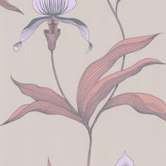 ORCHID 66/4025 - New Contemporary - Cole & Son