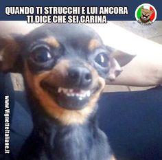 Clicca sull'immagine per visitare il sito. #Cani, #Persone #Divertenti, #Funny, #Funnypics, #Humor, #Humour, #Immagini, #Immaginidivertenti, #Italiane, #Lol, #Meme, #Memeita, #Memeitaliani, #Memes, #Memesita, #Memesitaliani, #Pics, #Umorismo, #Vignette, #VignetteitalianeIt