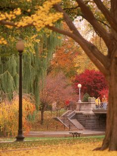 Public Gardens in Autumn  - Boston
