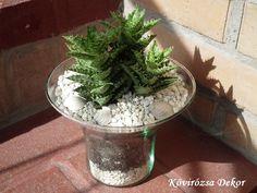 Aloe Juvenna üvegedényben   Kövirózsa Dekor Aloe, Plants, Decor, Succulents, Decoration, Plant, Decorating, Planets, Deco