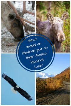 What would an Alaskan put on her bucket list? Photograph a grizzly? Skinny dip in the Arctic ocean? This Alaskan tells you what's on hers! Alaska Salmon, Alaska Cruise, Make Time, Arctic, North America, Dip, Cool Photos, Travel Tips, Blogging