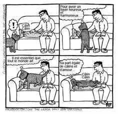 Si les chiens pouvaient parler, voici probablement ce qu'ils diraient ! Ces 15 images sont hilarantes...