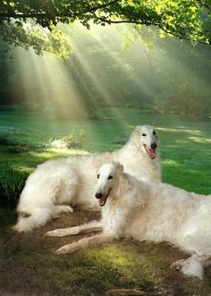 ...and then God created the Borzoi...what a beautiful creature!