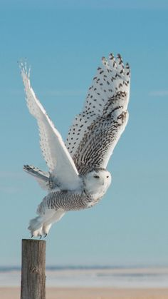 Most Beautiful Bird Pictures That Will Blow Your Mind Immediately - Animals Comparison Nature Animals, Animals And Pets, Cute Animals, Owl Photos, Owl Pictures, Most Beautiful Birds, Pretty Birds, Beautiful Creatures, Animals Beautiful