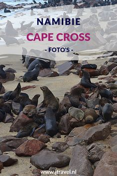 Tijdens mijn rondreis door Namibië bezocht ik de vele zeehonden bij Cape Cross. Hier zie je mijn foto's van de zeehonden van Cape Cross. Kijk je mee?  #capecross #zeehonden #namibie #fotos