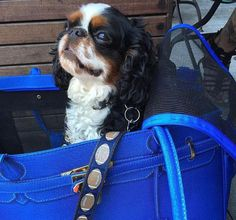 #APetWithPaws Carrier will give your pet the comfort they deserve and the style and functionality you need while out running errands or traveling! #PetCarrier #PetProducts #EcoFriendly