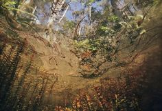 Underwater-in-Floridas-Swamps-05-685x469