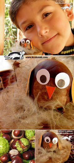 Chestnut OWLS  Too cute!