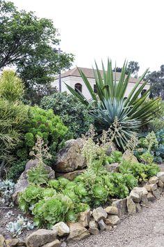 'n Waterwys lushof van vetplante en fynbos Plants, Plant, Planets