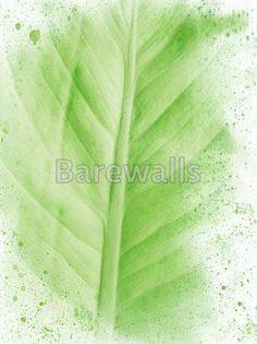 Tree Canopy Impression Poster Print