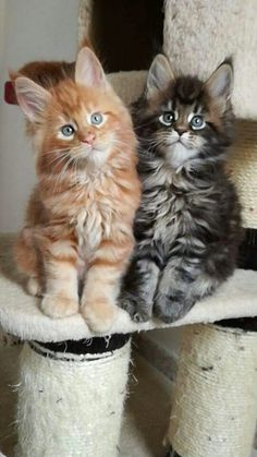 Oh my goodness, they have sweet faces!!