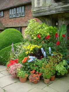 Beth Chatto, Gravel Garden, Container Gardening, Planting, Beautiful Flowers, Garden Design, Pots, Baskets, Exotic