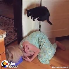 Tagged with funny, cat, mildly interesting, aww, wholesome; Shared by Parkour! Funny Animal Memes, Funny Animal Videos, Cute Funny Animals, Funny Animal Pictures, Cute Baby Animals, Funny Cute, Animals And Pets, Cute Cats, Funny Humor