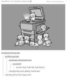 Purrfect// All the puns. Love it!