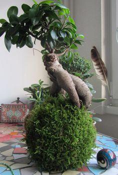 kokedama fíkus String Garden, Hanging Gardens, Bonsai, Dinosaur Stuffed Animal, Creativity, Interior Design, Plants, Rooftop Gardens, Nest Design