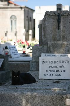 Once can understand why cats are so often found in cemeteries - the sunshine on the concrete of the gravestones would be wonderfully warm.