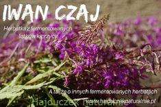 Pokrzywa - co można z niej zrobić? - Hajduczek naturalnie - proste sposoby na zdrowe życie Plants, Gastronomia, Plant, Planets
