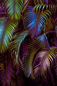 Cute wallpapers, screen wallpaper и aesthetic wallpapers. Phone Backgrounds, Wallpaper Backgrounds, Iphone Wallpaper, Mexican Palm Tree, Screen Wallpaper, Cute Wallpapers, Dahlia, Aesthetic Wallpapers, Palm Trees