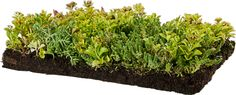 Our premium sedum blanket is grown specifically for extensive green roofs and…