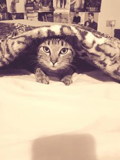 I thought I saw a pussycat #jaga http://ift.tt/2hKAigw