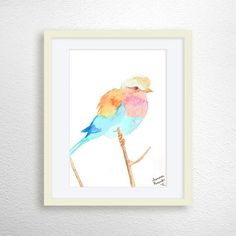 Lilac Breasted Roller Bird Bird Art Print by MiaoMiaoDesign
