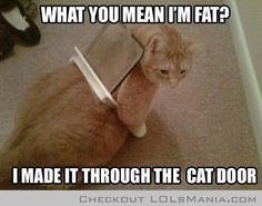 Too FAT cat!!!
