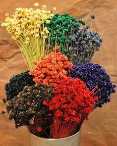 Dried Brazilian Hill Flowers