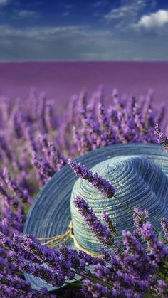 COLOR HARMONY Purple and blues complement each other as they are next to each other on the color wheel Lavender Cottage, Lavender Fields, Lavender Color, Lavender Flowers, Purple Flowers, Lavender Garden, Purple Love, All Things Purple, Shades Of Purple