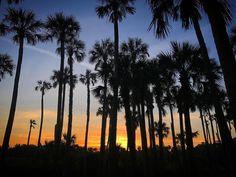 #photooftheday @saraleclaire904  Florida Lifestyle  #floridalifestyle #floridavibes #staugustine #oldestcity #happyplace #904 #howiflo #sunsetskies  #optoutside #pureflorida #natureisfree #natureisart #floridadaze #exploreflorida #livefree #neverstopexploring #iriesunset #palmtreelove #moodygrams #lovemyhome #favoritetimeofday #nobetterlife #floridalocal #explore #roamflorida #natureseeker #travel