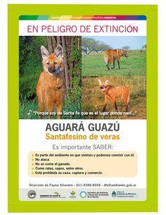 Aguará Guazú - En Peligro de Extinción - Region Litoral