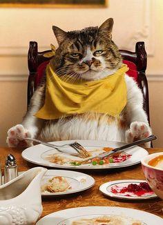 Gastronomic Cat