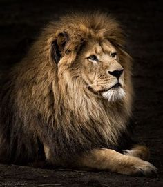 The King  Photo by © Wolf Ademeit #WildLives