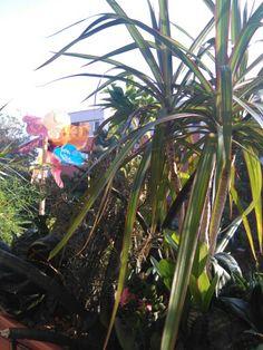 Balcony, Garden, Garten, Lawn And Garden, Balconies, Gardens, Gardening, Outdoor, Yard