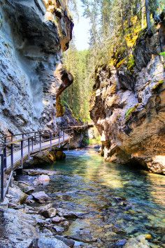 The Johnston Canyon area is located between Banff and Lake Louise along the Trans Canada Highway .