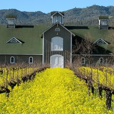 The best Napa Valley wineries to visit feature a tasting room in a cave, artisanal cheese pairings, on-site sommeliers and more—Megan Krigbaum; research by Stephanie Zhang.--Food & Wine Magazine