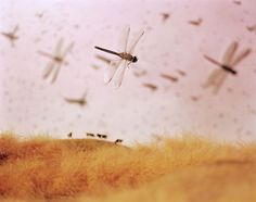 Lori Nix and Kathleen Gerber, Insect Infestation, 1998 Fine Art Photography, Landscape Photography, Spirit Of Summer, Victorian Books, Friendship Symbols, Dragonfly Art, Insect Art, Beautiful Creatures, Kansas