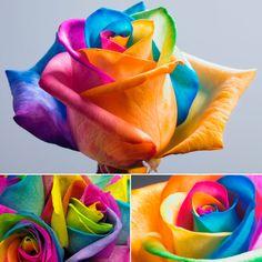 Rosas coloridas artificialmente - Somente Coisas Legais