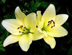Google Image Result for http://www.photographyblogger.net/wp-content/uploads/2010/05/flower23.jpg