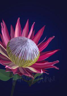 King Protea fine art limited edition print by Lamai Anne Flor Protea, Protea Art, Australian Native Flowers, Australian Artists, Floral Illustrations, Illustration Art, Flor Tattoo, King Protea, Art Beat