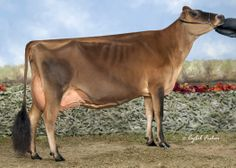 Arethusa Response Vivid EX-91 (USA) - mãe do touro VELOCITY - Jersey